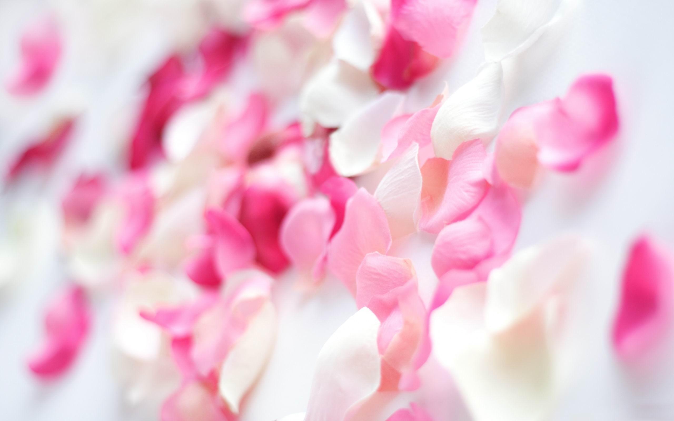 Pink Petals Plants Hd Photo Wallpaper Preview 10wallpaper Com