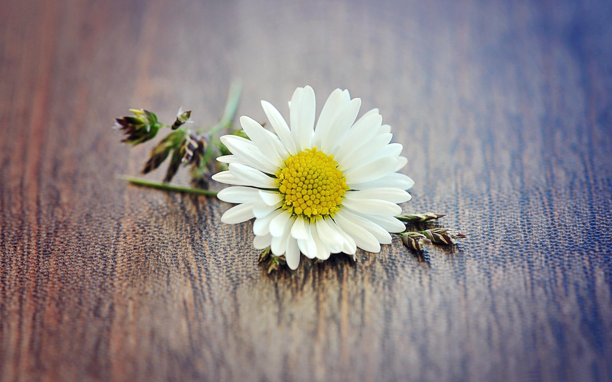 flower yellow grass white daisy still lifespring nature