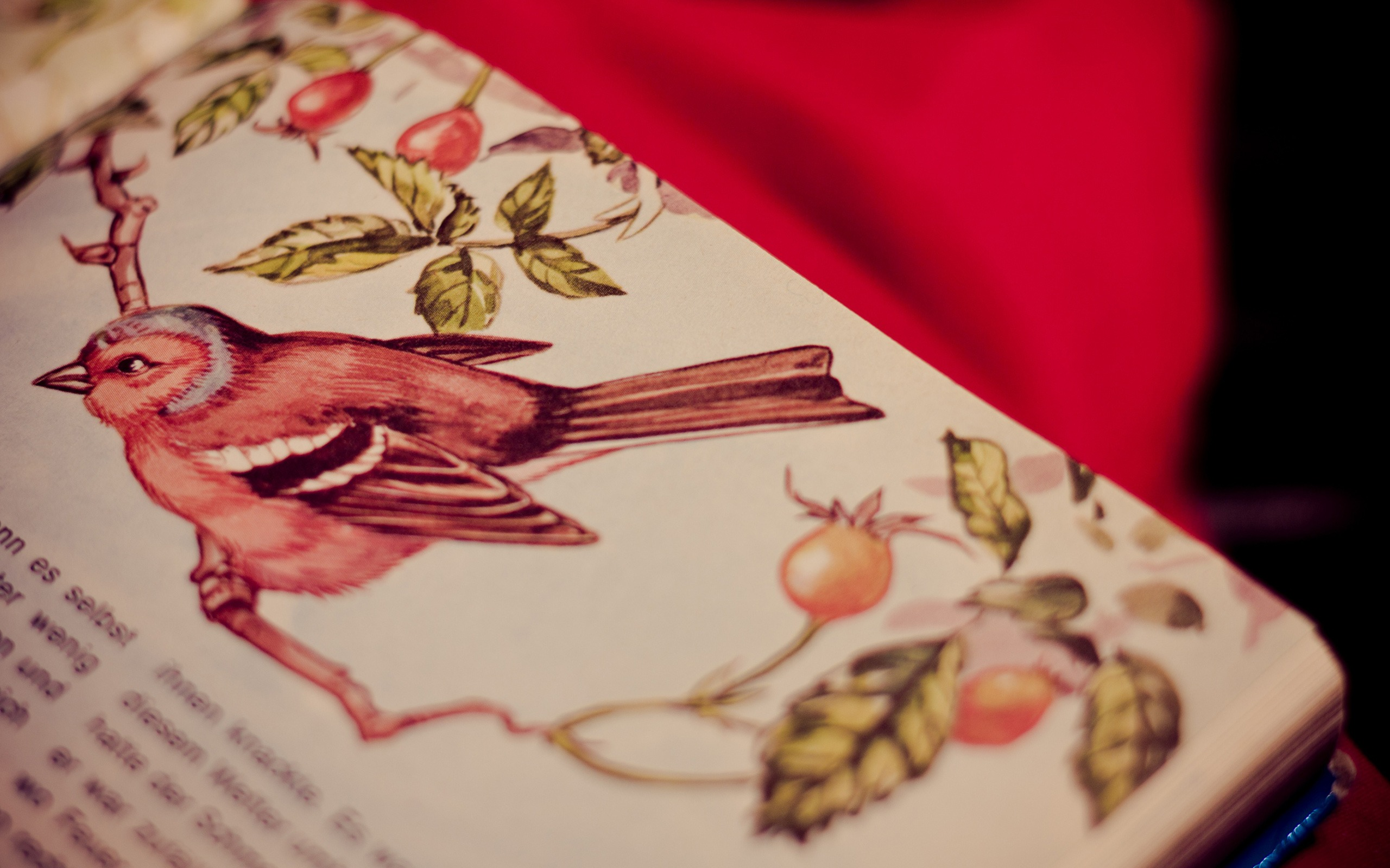 Table Vintage Themed Wallpaper Paint Bird Original Resolution 2560x1600