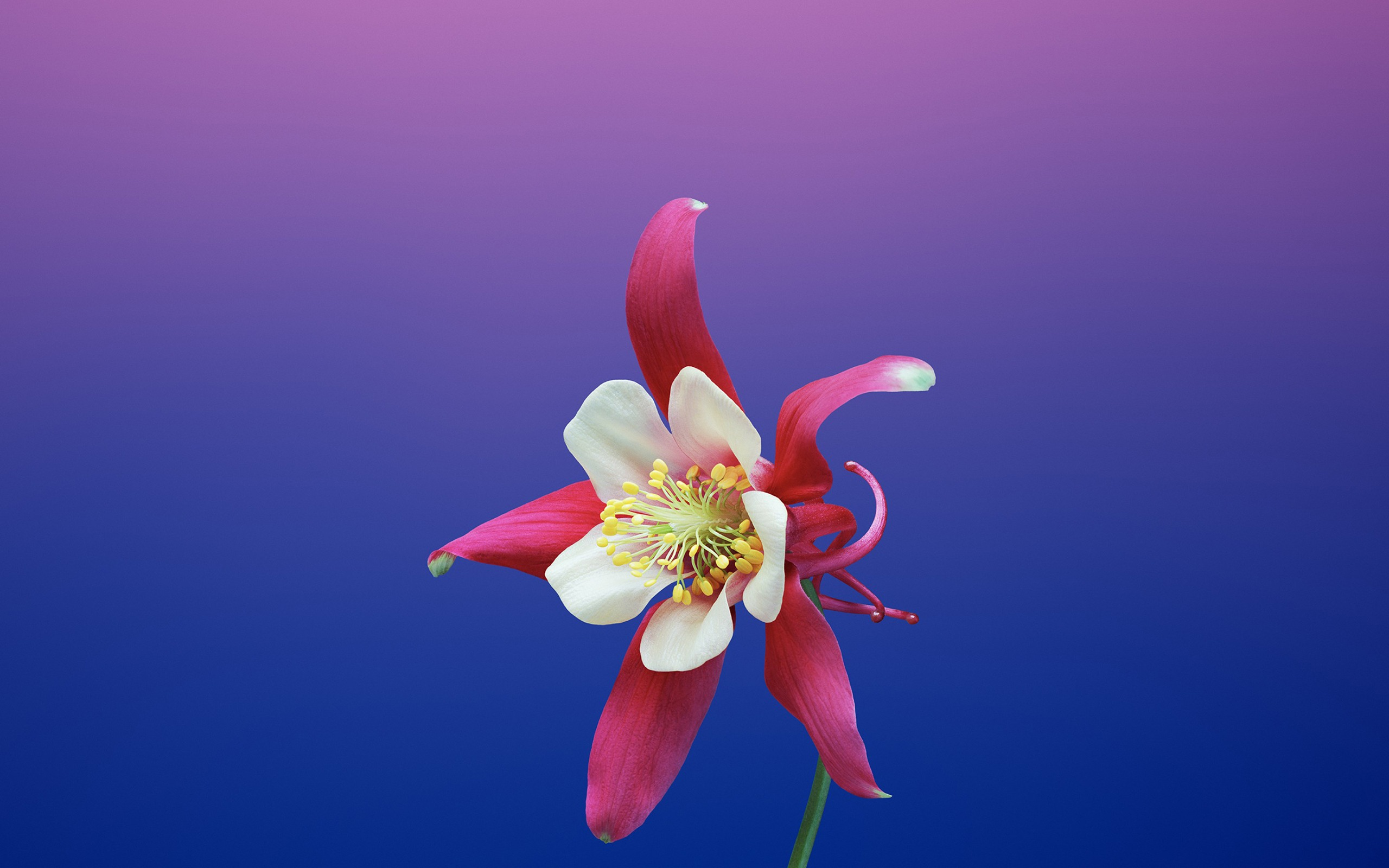 Aquilegia Apple Ios 11 Iphone 8 Iphone X Hd Wallpapers