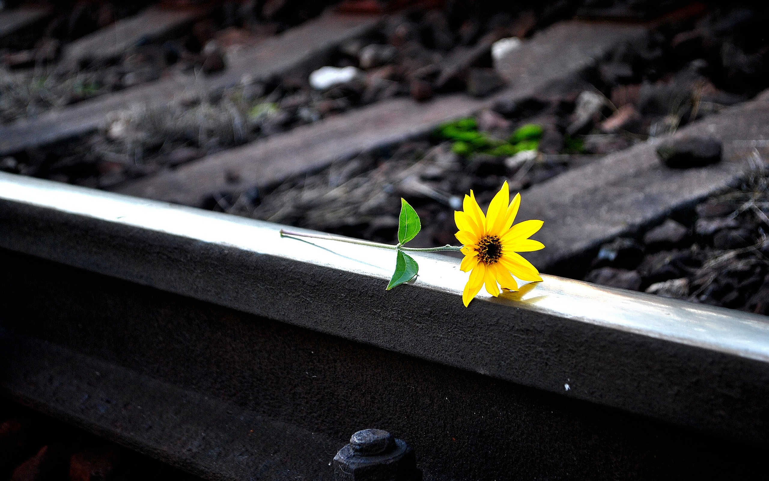 Yellow flower on railway trackNature HD Wallpaper Preview