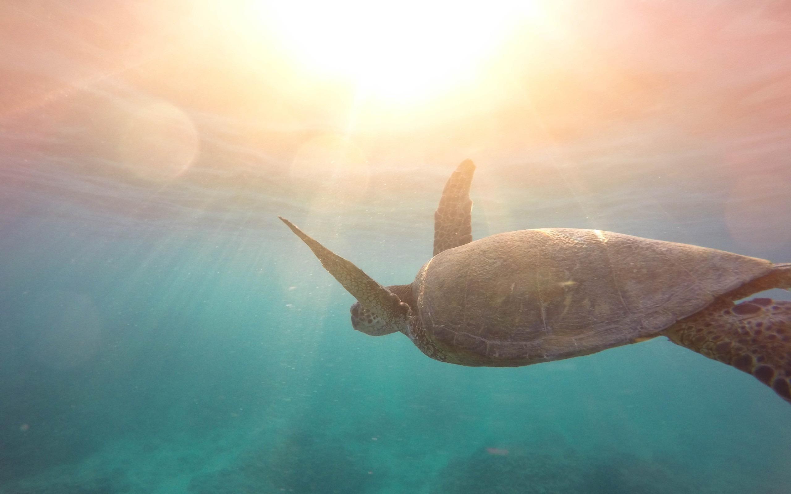Turtle Underwater 2017 Hd Wallpaper Preview 10wallpaper Com