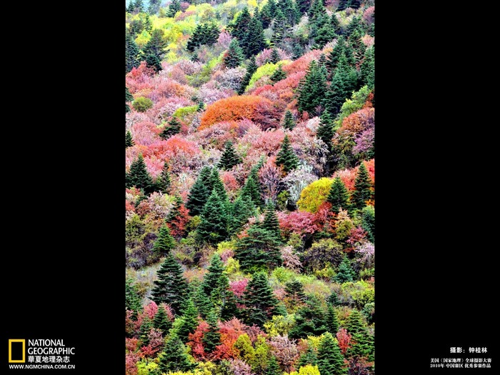 Diqing Colorful Autumn Wallpaper Views:6025 Date:5/22/2011 10:32:34 PM