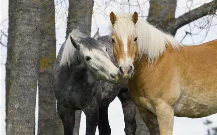 Small horse pony wallpaper Views:10204