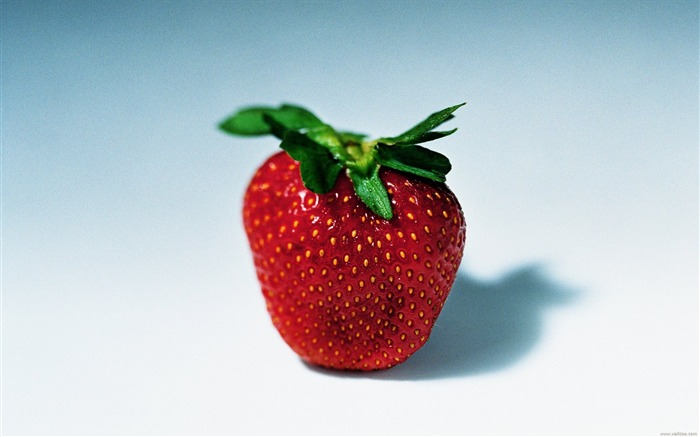 Fruit Photography Strawberry wallpaper Views:15347 Date:6/22/2011 10:54:08 PM