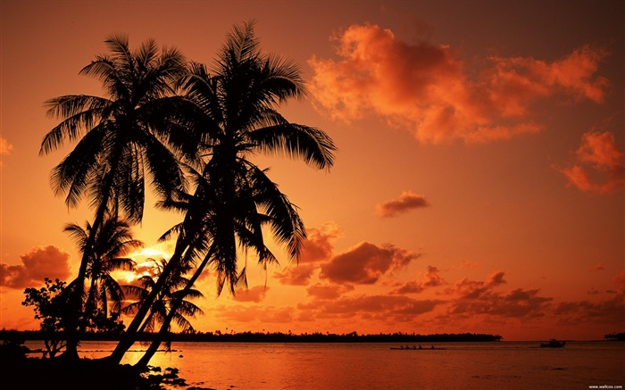 red sunset beach under palm trees wallpaper Views:80327