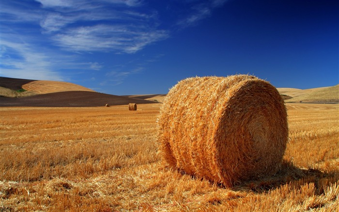 Autumn hay-the worlds natural landscape photography Views:12834