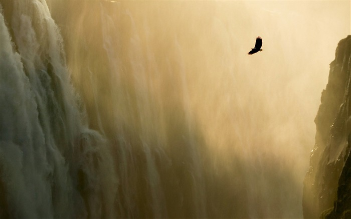 Eagle and Waterfall Wallpaper Views:31264 Date:7/22/2011 7:04:00 AM