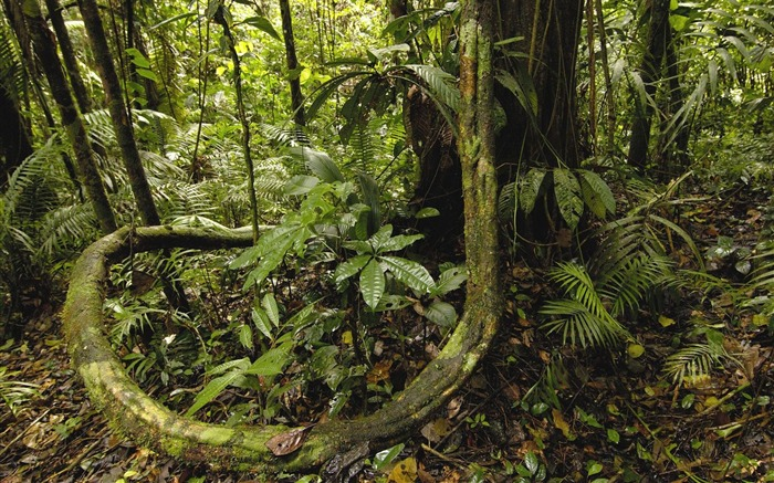 Ecuador- Yasuni National Park Amazon Rainforest Wallpaper Views:40121