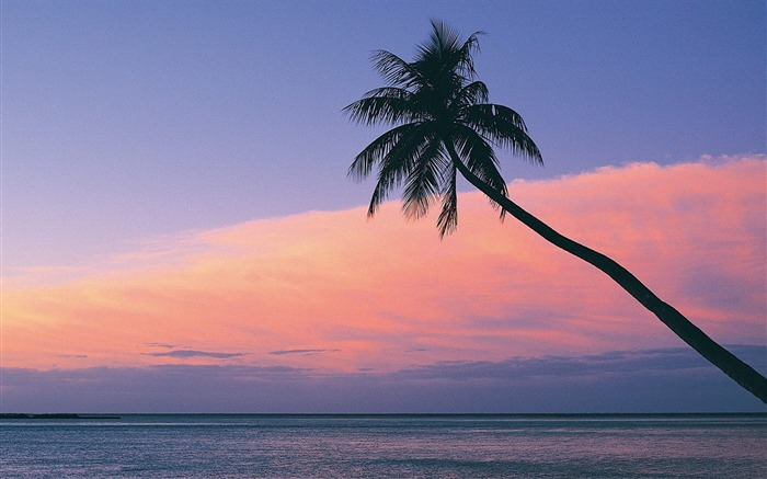 Fiji- beach sunset wallpaper Views:11648