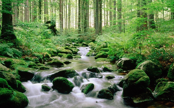 Germany- Bavarian Forest National Park Wallpaper Views:12144