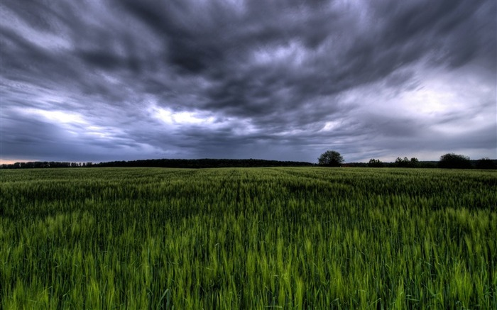Green field under stormy sky Germany Views:18442 Date:7/20/2011 6:01:03 PM