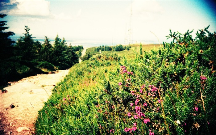 Lomo Lifestyle  Beautiful Lomography Snapshots Views:11250