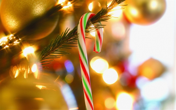Photo- Candy Cane on Christmas Tree Views:17649
