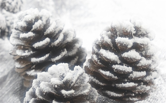 Snow Covered Pine Cone- Christmas objects and elements Views:7365