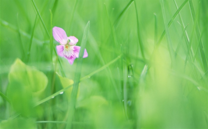 Soft Focus Photography - Romantic Flowers dim 08 Views:6238
