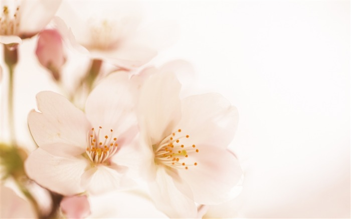 Soft Focus Photography - Romantic Flowers dim 14 Views:13094
