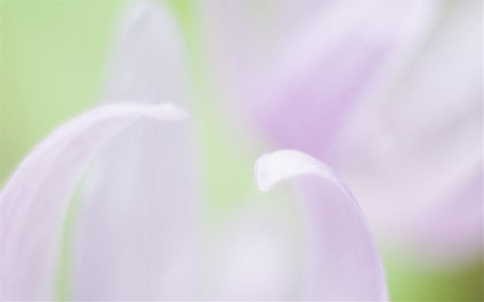 Soft Focus Photography - Romantic Flowers dim 18 Views:4150