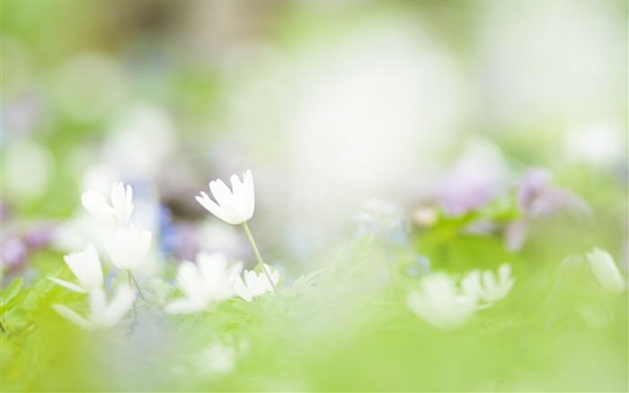 Soft Focus Photography - Romantic Flowers dim 19 Views:3747