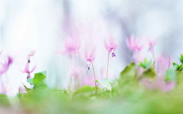 Soft Focus Photography - Romantic Flowers dim 20 Views:3719