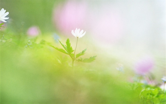 Soft Focus Photography - Romantic Flowers dim 21 Views:3857