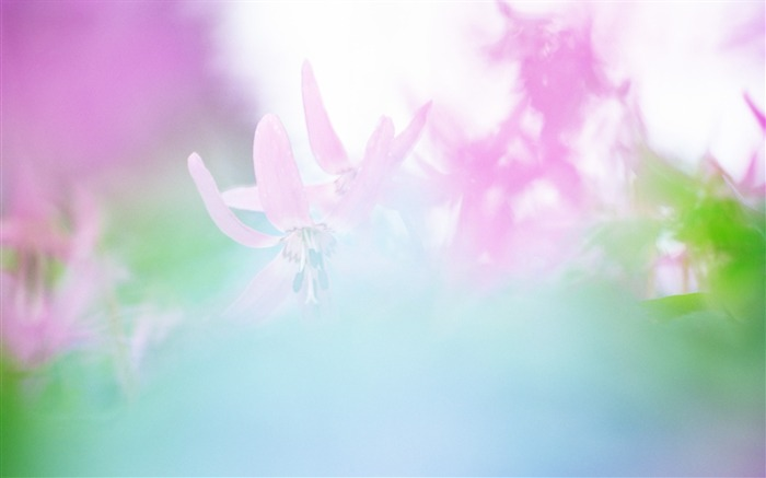 Soft Focus Photography - Romantic Flowers dim 23 Views:4942