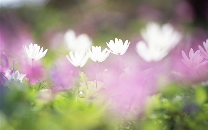 Soft Focus Photography - Romantic Flowers dim 24 Views:4348