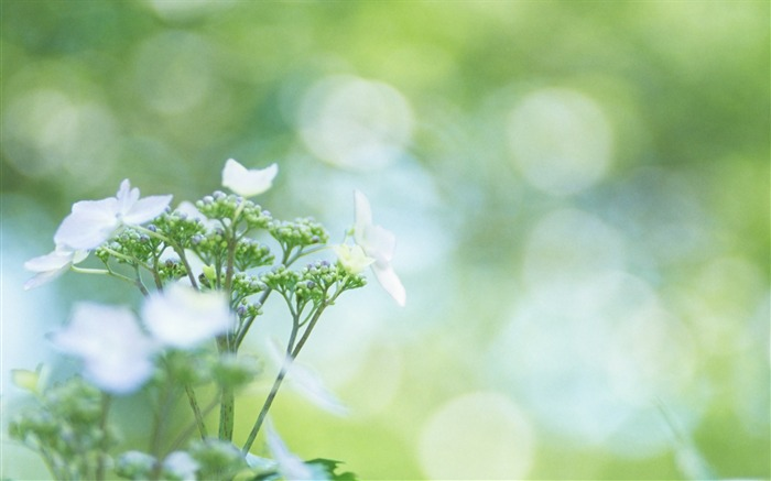 Soft Focus Photography - Romantic Flowers dim 26 Views:3562