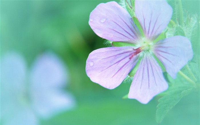 Soft Focus Photography - Romantic Flowers dim 31 Views:4067