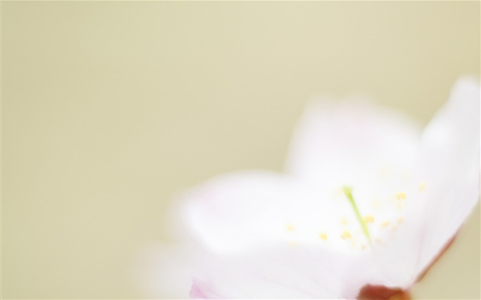Soft Focus Photography - Romantic Flowers dim 36 Views:3308