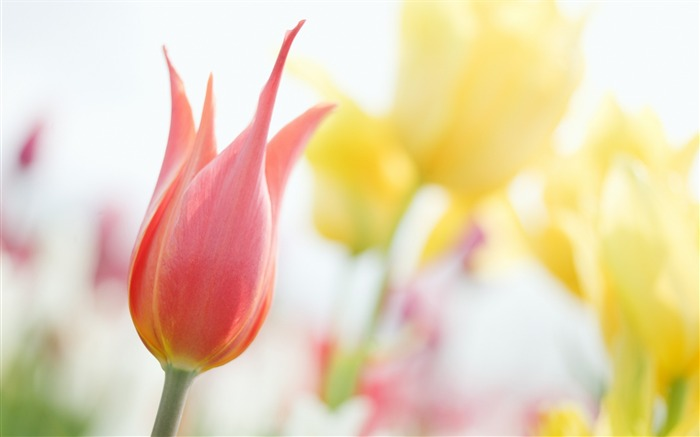 Soft Focus Photography - Romantic Flowers dim Views:9220