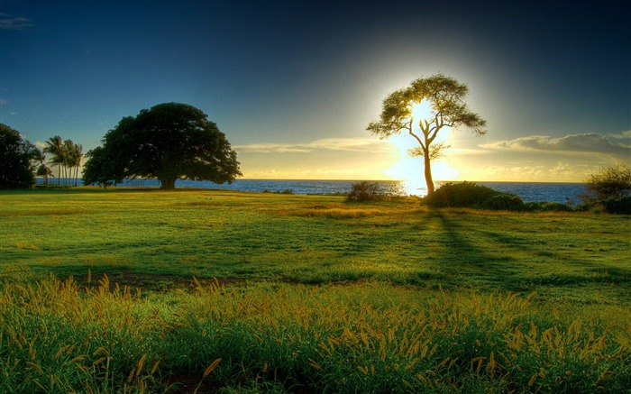 Sunrise Tree-the worlds natural landscape photography Views:37102