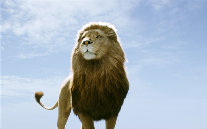 The Chronicles of Narnia 3 The Voyage of the Dawn Treader Movie Wallpapers 06 Views:8270 Date:7/2/2011 5:44:48 PM