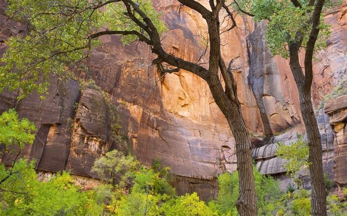 Utah- Zion National Park Wallpaper Views:3533