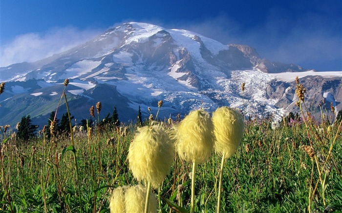 Washington- Mount Rainier National Park Wallpaper Views:3747