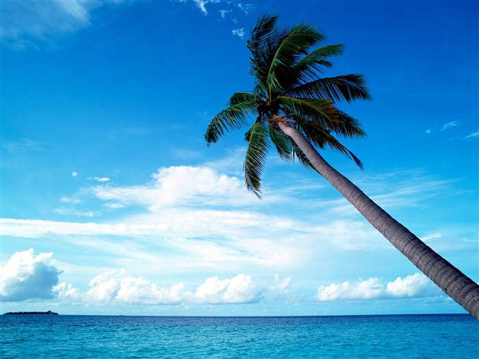 blue sky in the palm tree wallpaper Views:89833