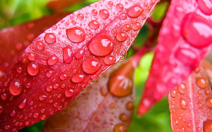 Colorful leaves of plants under the wallpaper macro Views:25827