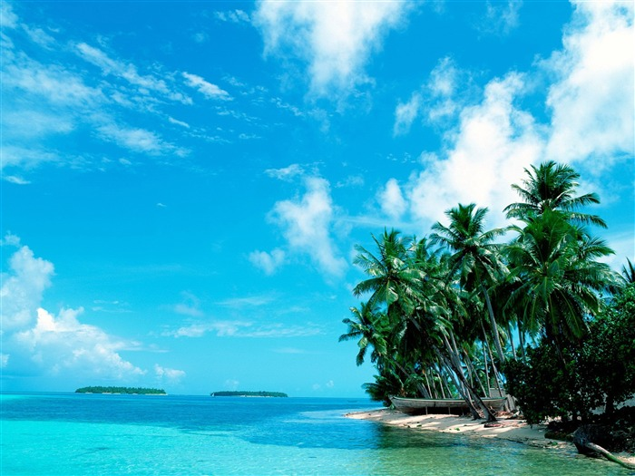 of the Maldives island of coconut palms wallpaper Views:13937