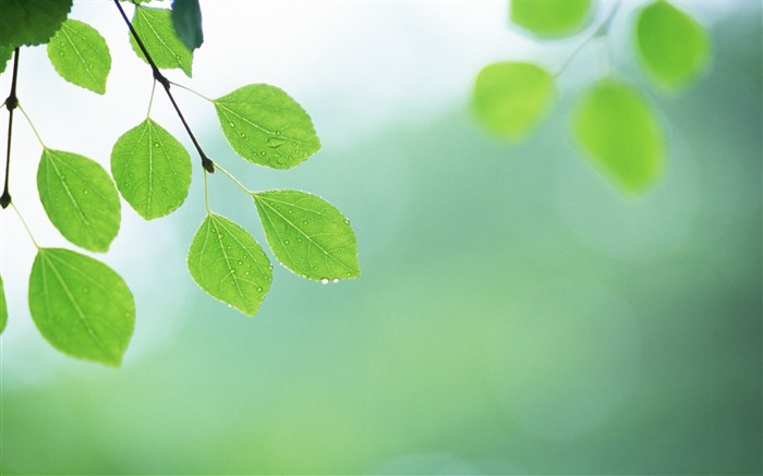 10 Soft Focus Green Leaves Pictures-Ethereal Green Leaves photos  Views:6004