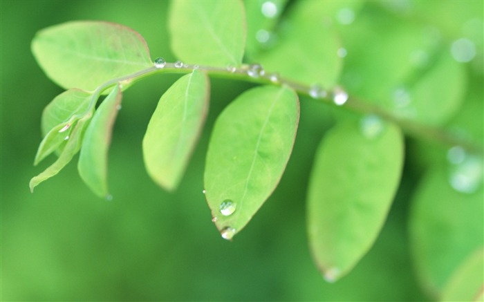 19 Soft Focus Green Leaves Pictures-Ethereal Green Leaves photos Views:3642