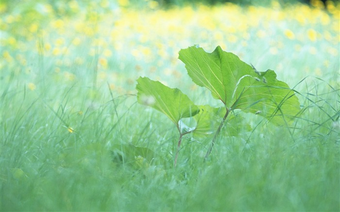 1 Soft Focus Green Leaves photos-Idyllic Green Leaves Wallpaper Views:9337