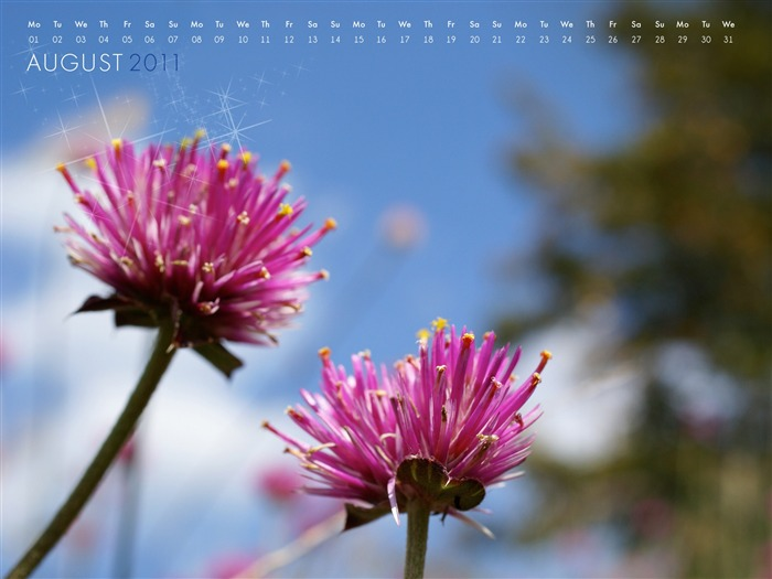 2011-august-wallpaper-Photographic Views:8897 Date:8/1/2011 9:39:54 PM