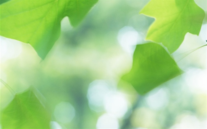 20 Soft Focus Green Leaves Pictures-Ethereal Green Leaves photos Views:3512