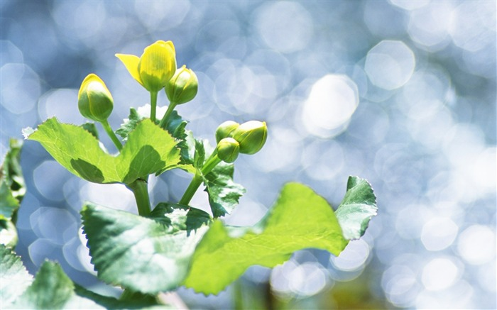 25 Soft Focus Green Leaves photos-Idyllic Green Leaves Wallpaper Views:3834