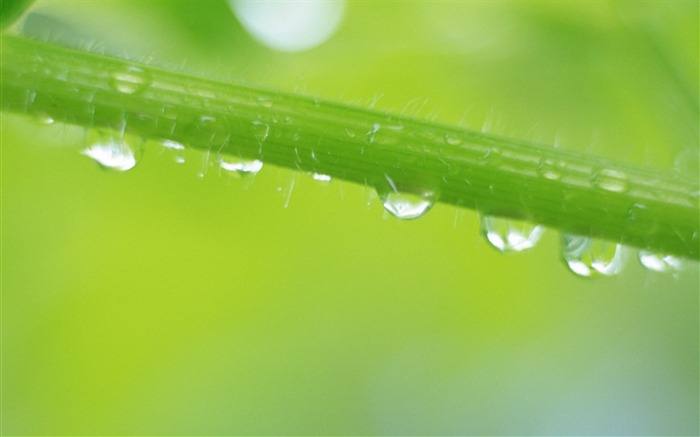 26 close-up photo of Water droplets on leaf Views:5013