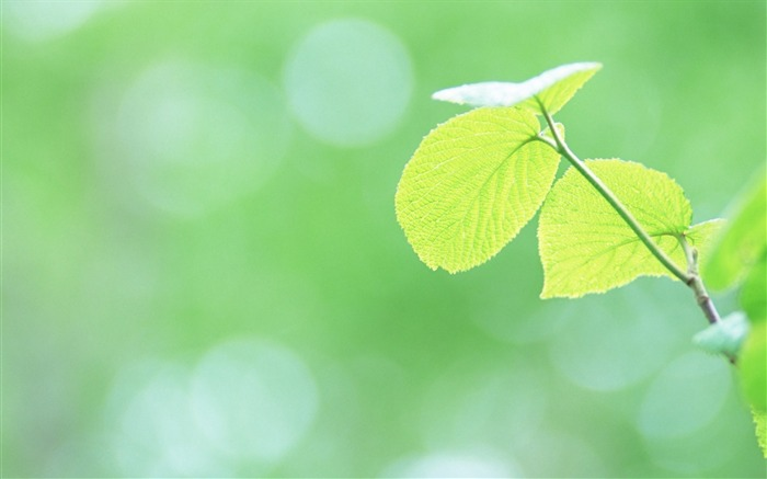 2 Soft Focus Green Leaves Pictures-Ethereal Green Leaves photos Views:5818