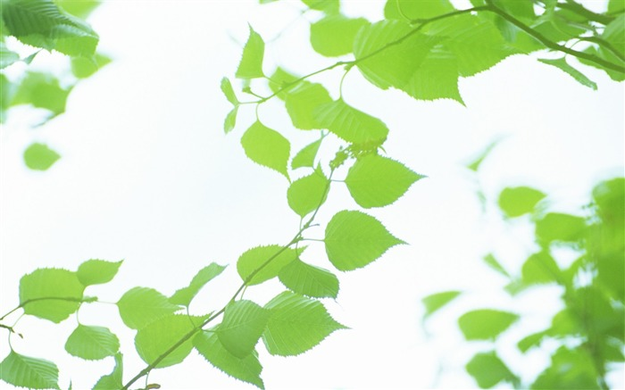 32 Soft Focus Green Leaves Pictures-Ethereal Green Leaves photos Views:3396
