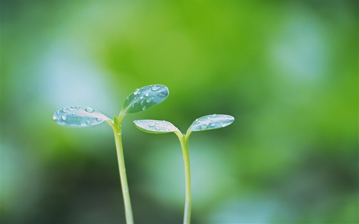 37 Soft Focus Sprouts Photos-Dreamy greeny sprouts photo Views:4120