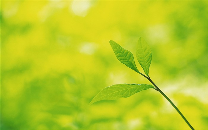39 Soft Focus Green Leaves photos-Idyllic Green Leaves Wallpaper Views:8549