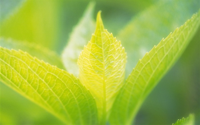 40 soft focus green leaves photo-hazy soft green leaves photos Views:3822